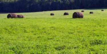 Field with Haystacks